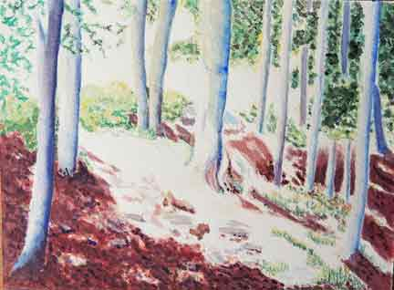 watercolour of woods in sunlight
